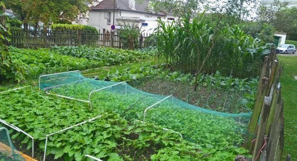 jardin potager partagé Bernard de Jussieu