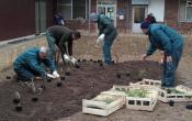 Plantation des végétaux