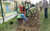 Le Mesnil Saint Denis : plantation de la haie le long du Clos de Breteuil