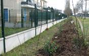 Le Mesnil Saint Denis : la haie plantée devant le Clos de Breteuil